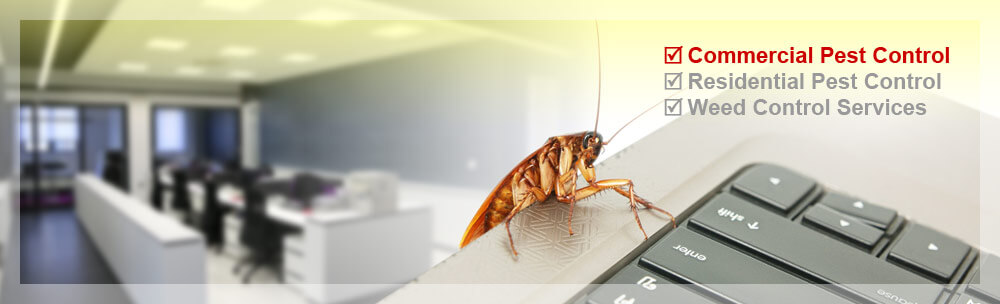 commercial-pest-control-tacoma-wa
