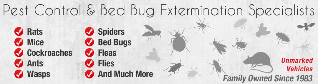 pest control professional for bed bug extermination